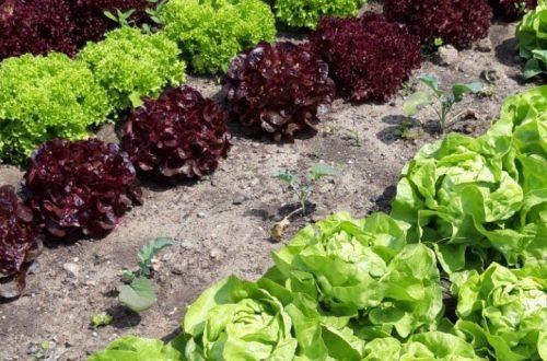 Förderung sozialer Gartenprojekte