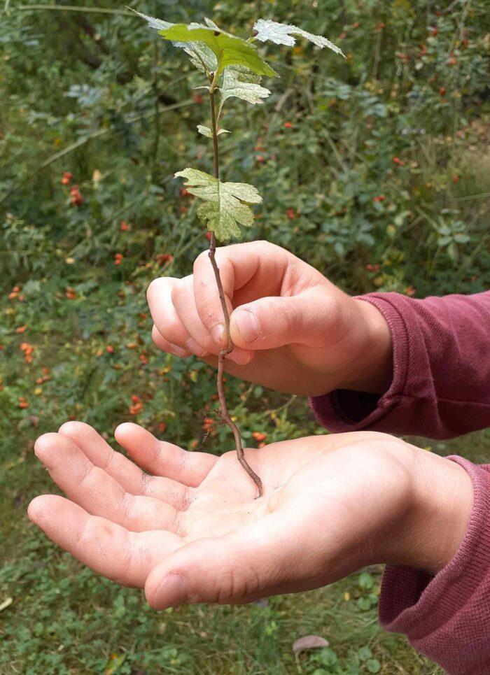 Ein Kind hält eine Pflanze in den Händen.