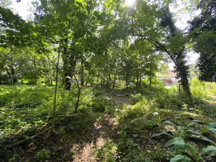 Eine Grünfläche mit vielen Bäumen.